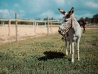 002 Avatud talude päeva avaüritus Juurimaa Tallis. Foto: Ken Mürk