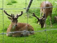 014 Elistvere loomapargis. Foto: Urmas Saard