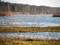 001 Esimene jõulupüha 2015 Pärnu rannas Foto Urmas Saard