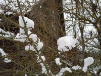Lume kunstiteosed Vaiatu poe juures. Foto: Jaan Lukas / Külauudised