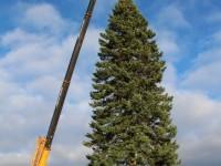 005 Hõbenulg on Otepääl käesoleva aasta jõulupuu. Foto: Monika Otrokova