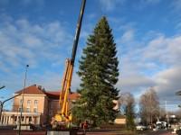 006 Hõbenulg on Otepääl käesoleva aasta jõulupuu. Foto: Monika Otrokova