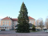 009 Hõbenulg on Otepääl käesoleva aasta jõulupuu. Foto: Monika Otrokova