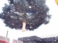 002 21. nov 2014 sai lumine Pärnu jõulupuu Foto Urmas Saard