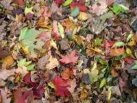 Sügisesed lehed Luua mõisapargis. Foto: Jaan Lukas