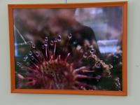 008 Joosep Ailiste loodusfotod Sindi gümnaasiumis. Foto: Urmas Saard
