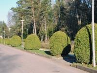 006 Rahumäe kalmistul. Foto: Urmas Saard