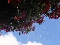 002 Lillede kastmine Sindis. Foto: Urmas Saard