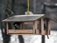 001 Lindude talvine toitmine Foto Urmas Saard