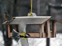 00 Lindude talvine toitmine Foto Urmas Saard