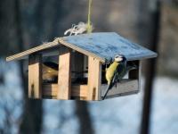 006 Lindude talvine toitmine Foto Urmas Saard