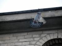 005 Linnuvaatlus Sindi linnas. Foto: Urmas Saard