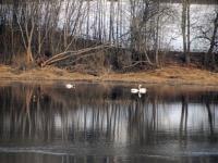 017 Linnuvaatlus Sindi linnas. Foto: Urmas Saard