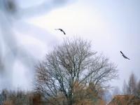 018 Linnuvaatlus Sindi linnas. Foto: Urmas Saard