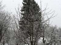 Lumi 25. aprilli hommikul Sindis. Foto: Urmas Saard / Külauudised