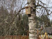 Linnumaja kase küljes. Foto: Kaarel Oras