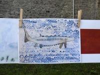 003 Rändekalade päev Padisel. Foto: Urmas Saard / Külauudised