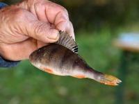 017 Rändekalade päev Padisel. Foto: Urmas Saard / Külauudised