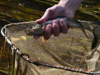 072 Rändekalade päev Padisel. Foto: Urmas Saard / Külauudised