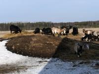 061 Alpakafarmis, Rohelise Jõemaa Koostöökogu ühepäevakohvikud. Foto: Urmas Saard