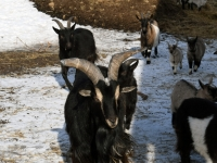 062 Alpakafarmis, Rohelise Jõemaa Koostöökogu ühepäevakohvikud. Foto: Urmas Saard