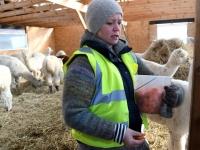 067 Alpakafarmis, Rohelise Jõemaa Koostöökogu ühepäevakohvikud. Foto: Urmas Saard