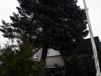 003 Sindi sotsiaalkeskuse ette toodi jõulupuu. Foto: Urmas Saard