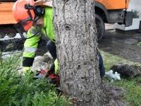 007 Sindi sotsiaalkeskuse ette toodi jõulupuu. Foto: Urmas Saard