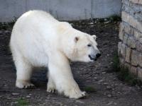 002 Tallinna loomaaia 80. sünnipäev. Foto: Urmas Saard
