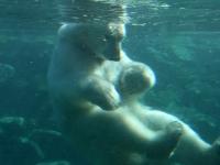 006 Tallinna loomaaia 80. sünnipäev. Foto: Urmas Saard