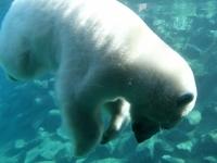 007 Tallinna loomaaia 80. sünnipäev. Foto: Urmas Saard
