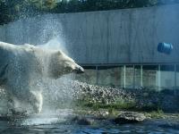 012 Tallinna loomaaia 80. sünnipäev. Foto: Urmas Saard