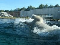 017 Tallinna loomaaia 80. sünnipäev. Foto: Urmas Saard