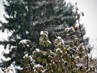001 Tänavuse sügise esimene lumi Sindis. Foto: Urmas Saard