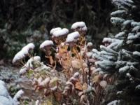 002 Tänavuse sügise esimene lumi Sindis. Foto: Urmas Saard