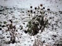 004 Tänavuse sügise esimene lumi Sindis. Foto: Urmas Saard