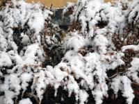 008 Tänavuse sügise esimene lumi Sindis. Foto: Urmas Saard
