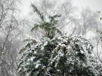 009 Tänavuse sügise esimene lumi Sindis. Foto: Urmas Saard