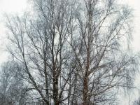 002 Tõnisepäeva lumesadu Sindis. Foto: Urmas Saard