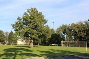 Euroopa aasta puu on Orissaare kooli staadionil asuv tamm. Foto: wikipeedia