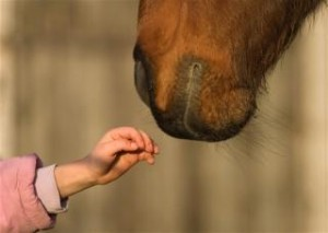 120244-320x228-Hippotherapy