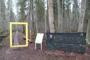 """Järvselja ürgmets ja """"kollane aken"""". Foto: SA Järvselja Õppe- ja Katsemetskond/A. Tuul."""