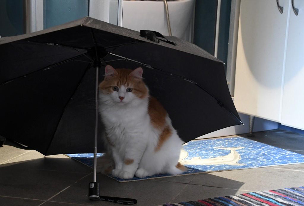 Arnold vihmavarju all. Foto Urmas Saard