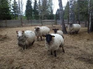 Üks näide maaelust. Foto: Elina Allas