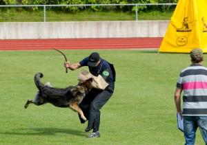Kolmevõistluse üks osaala: kaitse. Foto: Kalev Lilleorg/klubi Sportkoer