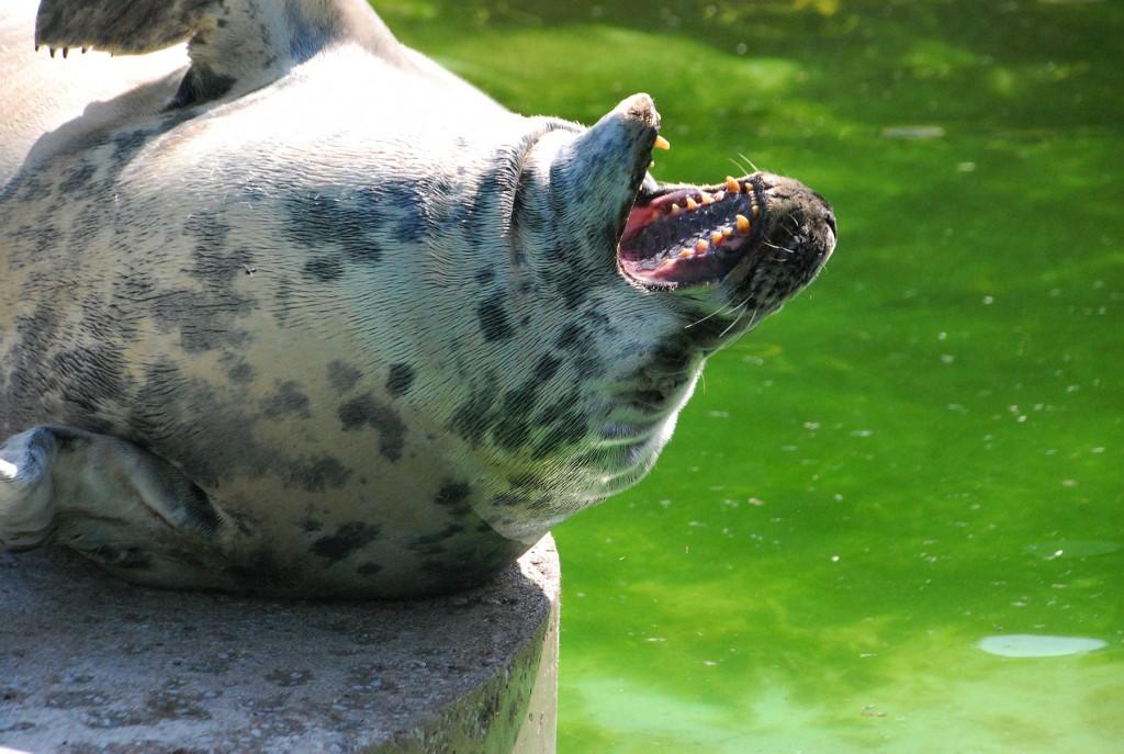 Kaheksakümnene Tallinna loomaaed. Foto Urmas Saard