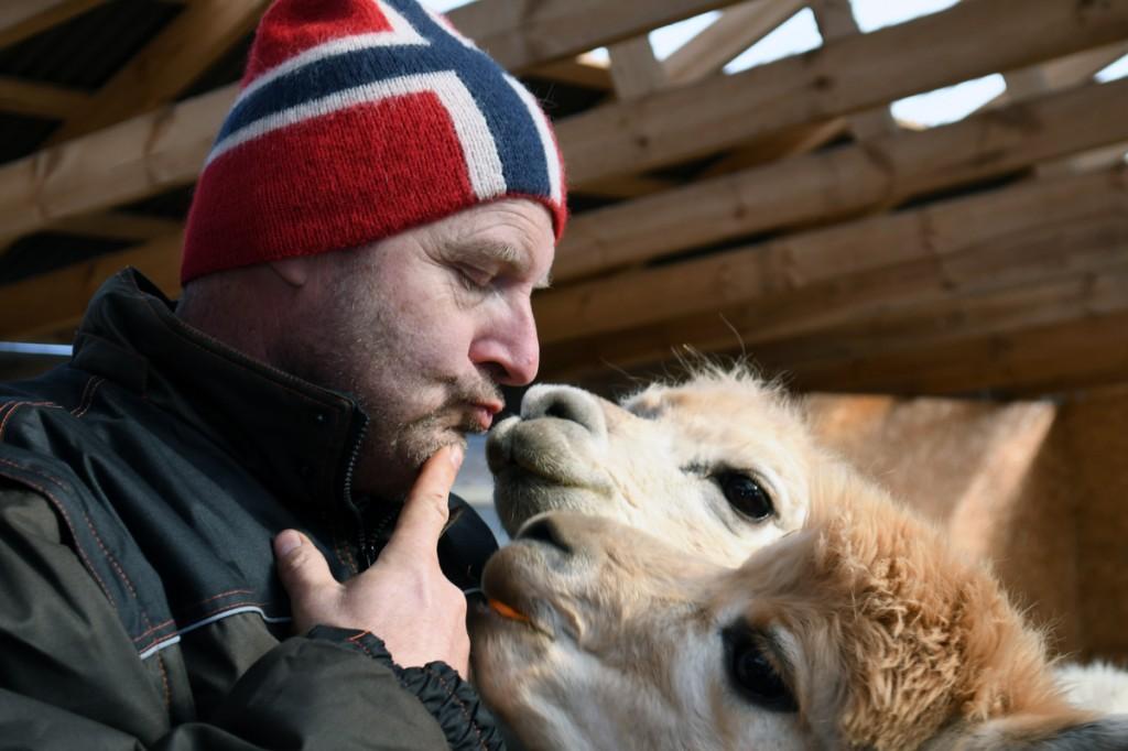 Kai Ødegårdstuen Kännu talu alpakafarmis Foto Urmas Saard