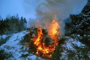 Kuuskede põletamine naabrite juures, Paikuse alevis Foto Urmas Saard