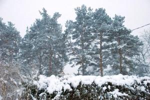Lumesajune tõnisepäev Sindis Foto Urmas Saard