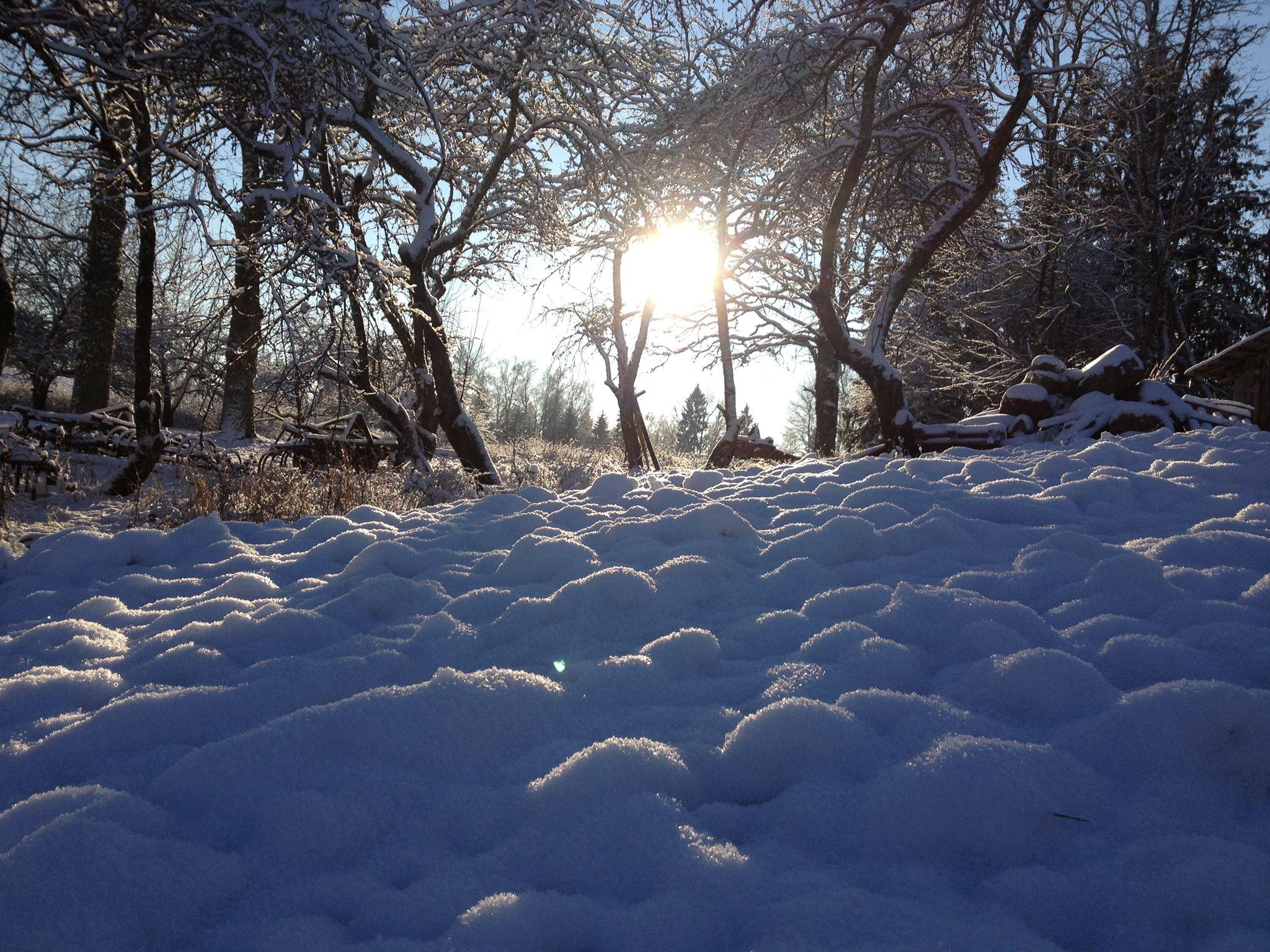 Mälestus talvest. Foto: Kylauudis.ee